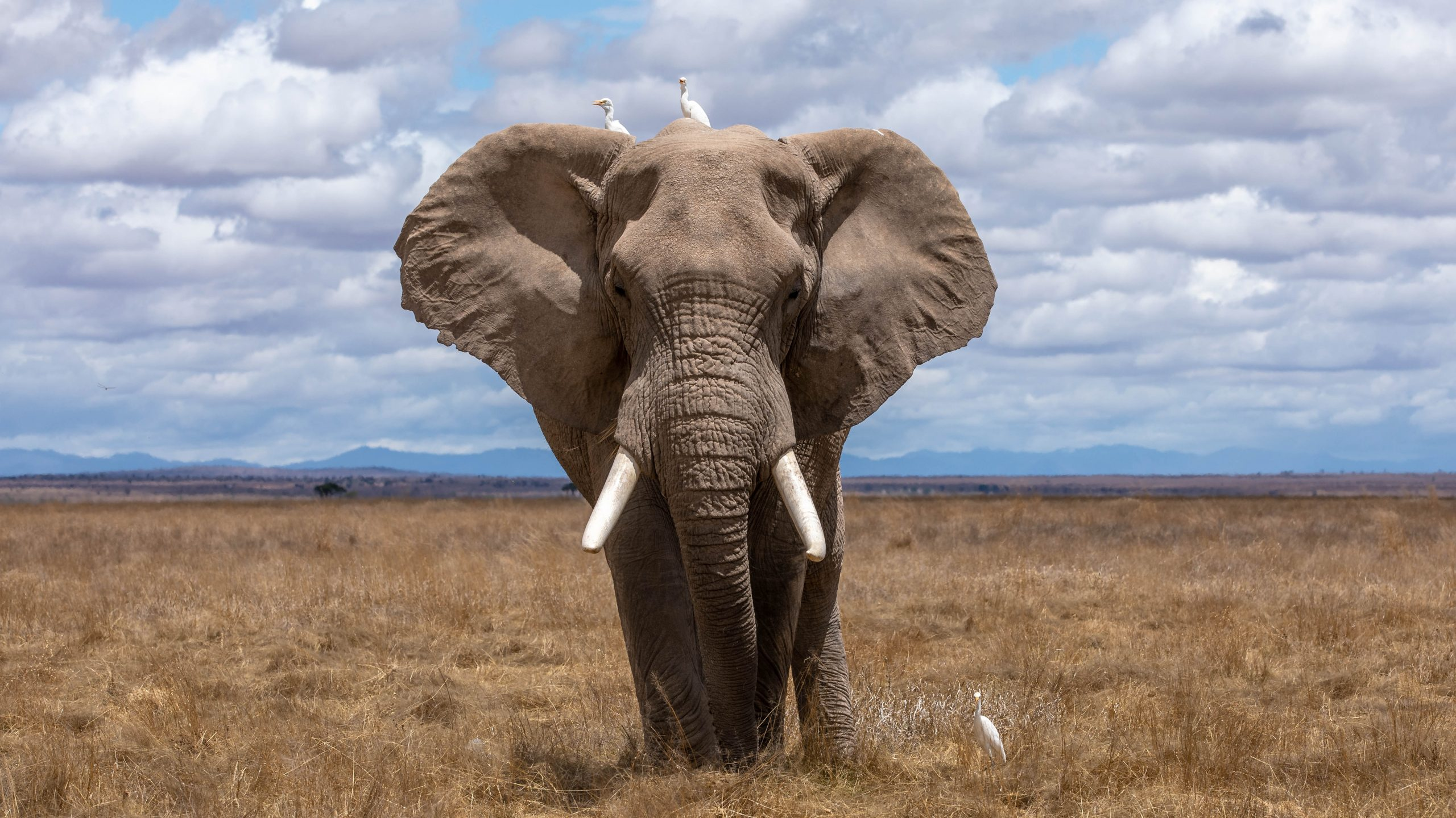 New Episode – Size of an Elephant