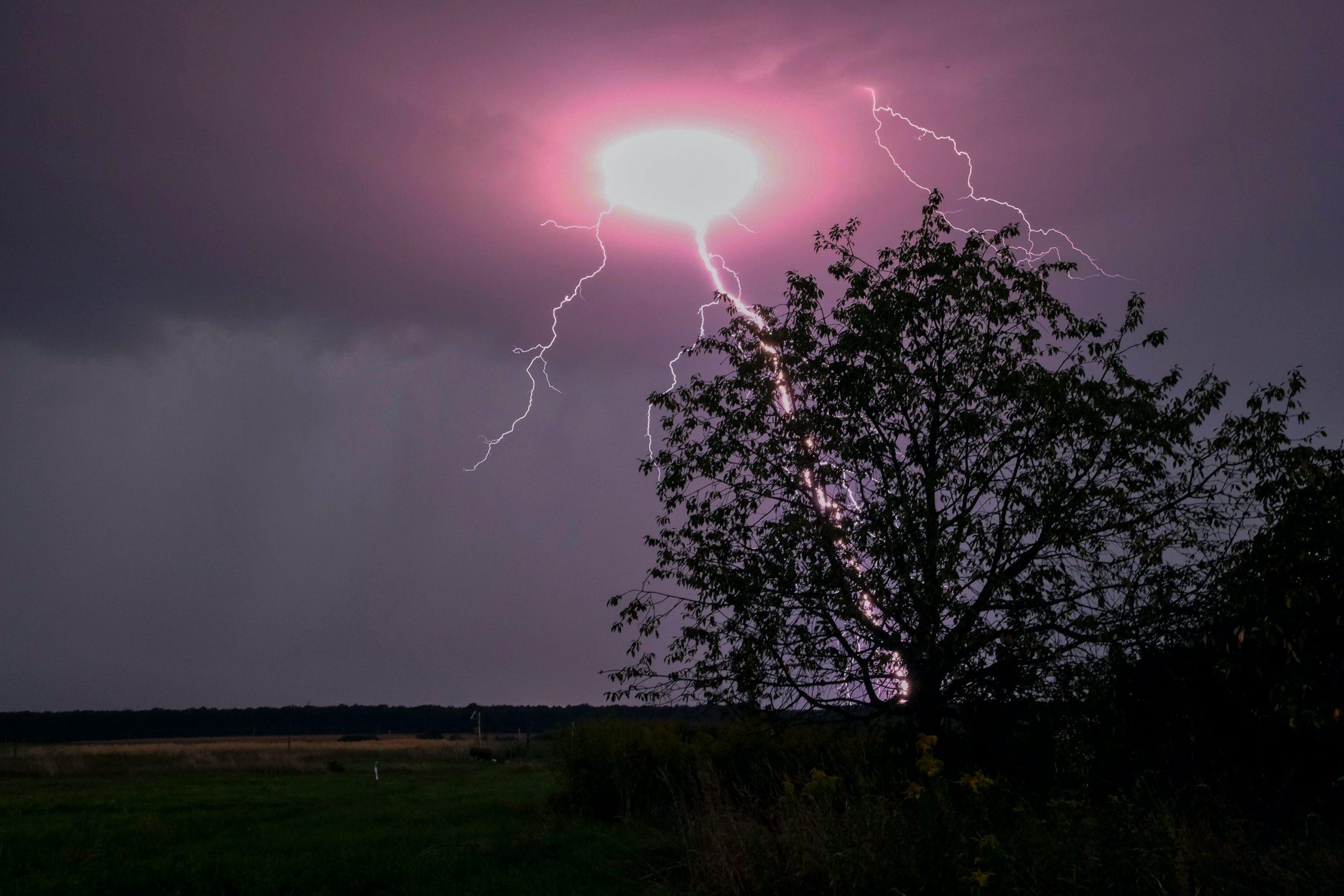 Grow, Grow the Lightning Tree